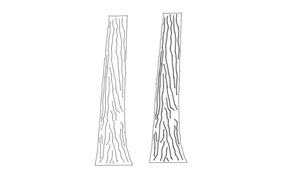 Tree Trunk dxf File